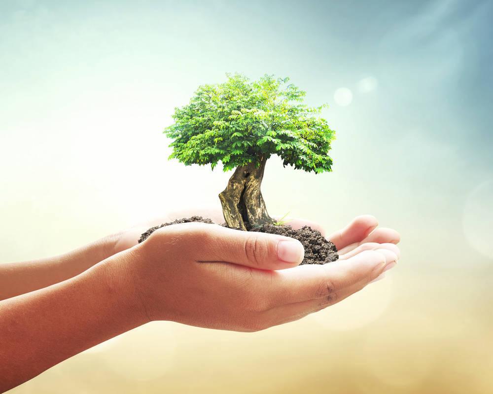 Cómo encontrar Productos para Limpieza Ecológica